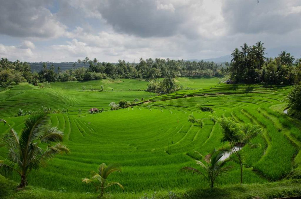 indonesia farm